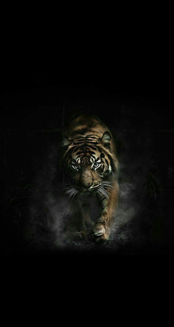 Dark Wild Wallpaper Wild Animal Wallpaper Tiger Pictures Tiger Images