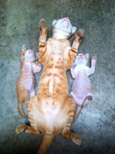 Nap time!- Gatos e suas posições...