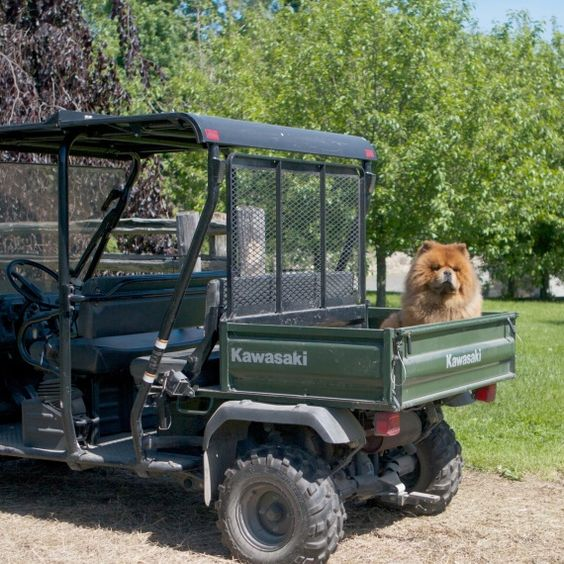 GK supervising the work on my farm #marthastewartpets