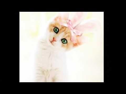 Fantastis 14 Gambar Kucing Anggora Lucu Dan Menggemaskan Galeri Kucing Lucu Menggemaskan From Www Youtube Com 5000 Gambar Menggambar Kucing Gambar Kucing