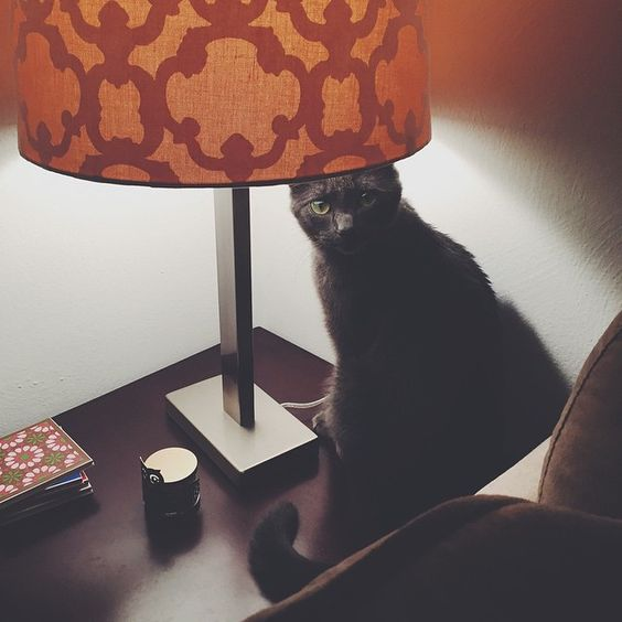 Late night #Caturday creeper  #Padgram