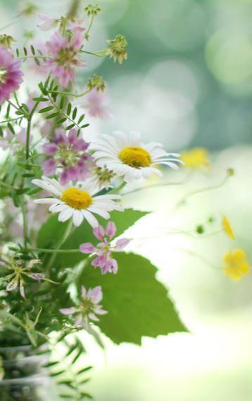 Springtime Field flowers