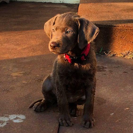 my grand pup Mylo!!