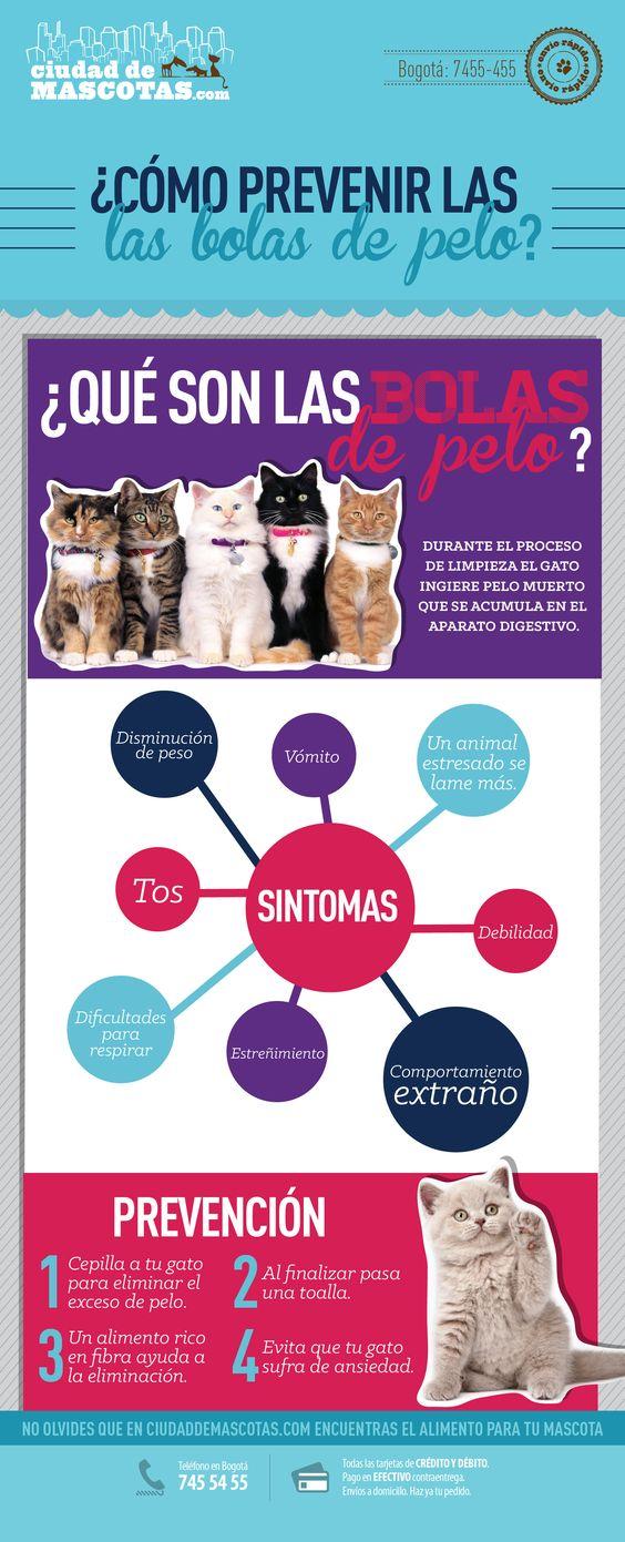Las bolas de pelo se presentan sobre todo en gatos de pelo largo. Sin embargo es importante prevenirlas y cuidar a tu mascota.