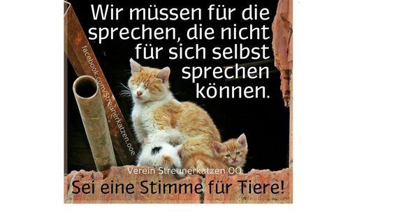 Cats: Neutering - Austria