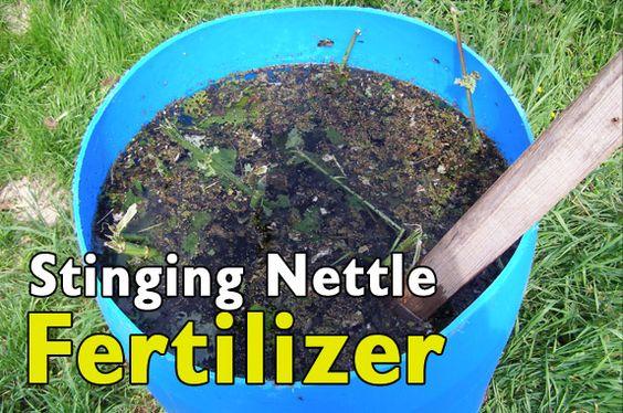 create your own free fertilizer, better than the commercial stuff. Stinging Nettle Fertilizer: http://fivegallonideas.com/nettle-tea-fertilizer/