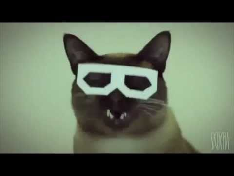 Dubstep Hipster Cat (Full Video)