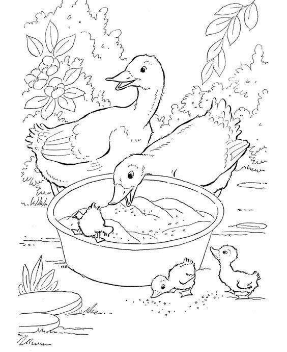 Coloriage animaux ferme | Canards nager dans l'étang de la ferme 3742