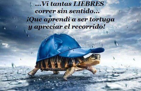 Ví tantas liebres correr sin sentido... Qué aprendí a ser tortuga y apreciar el recorrido!  -  I saw so many hares running nonsense ... I learned to be turtle and appreciate the journey!    -  foto de Inspiraciones del Cid