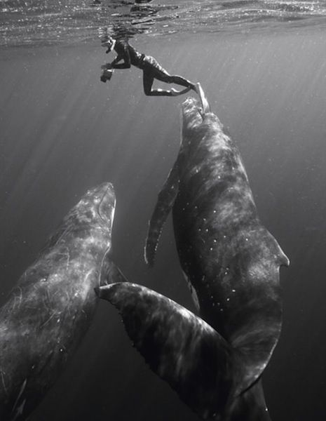 """swimming along   ( FLOATER """"Studio cosmos, Kingdom of Tonga"""" by Bryant Austin, who doesn't take his boat within 10 feet of a whale, preferring for them to swim closer. :: http://www.nytimes.com/2011/04/19/science/19profile.html )"""