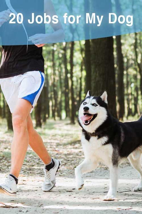 20 Jobs For My Dog Dog Walking Business Dogs Dog Obedience Classes