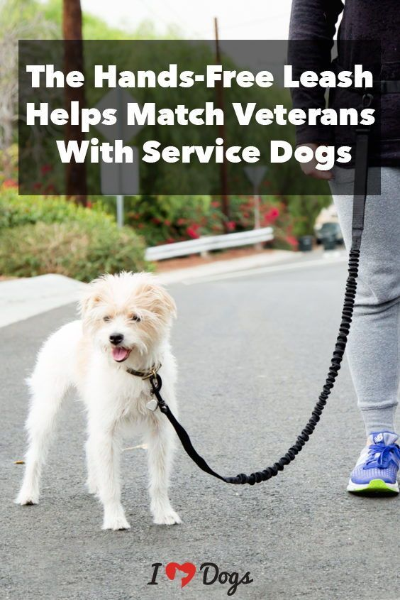 The Hands Free Leash Helps Match Veterans With Service Dogs