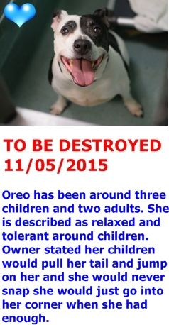 SAFE 11-6-2015 by Second Chance Rescue --- Brooklyn Center  My name is OREO. My Animal ID # is A1056662. I am a female black and white am pit bull ter mix. The shelter thinks I am about 9 YEARS old.  I came in the shelter as a OWNER SUR on 11/02/2015 from NY 11208, owner surrender reason stated was MOVE2PRIVA.  http://nycdogs.urgentpodr.org/oreo-a1056662/