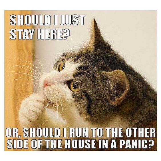 Funny Cat Memes: Snowflakes, Cats And Memes On Pinterest