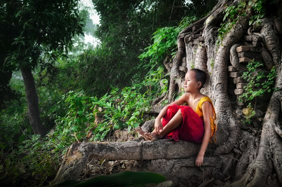 A little Burmese Monk sits on the roots of an ancient tree on a hilltop overlooking a forest