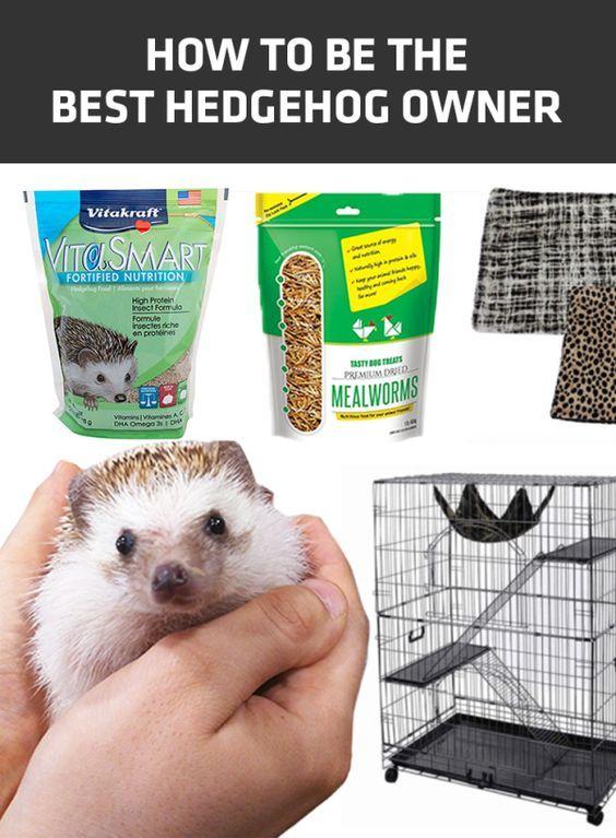How To Be The Best Hedgehog Owner Hedgehog Cage Hedgehogs Pet