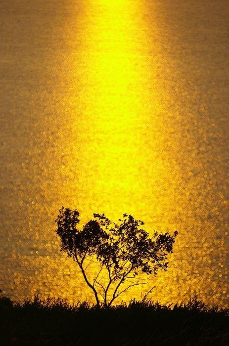 Golden Kandry-Kul