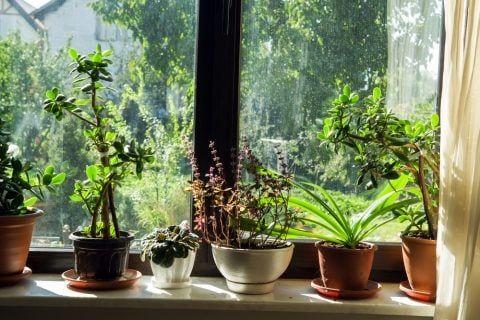 風水に良い観葉植物の種類 玄関 リビング トイレ 寝室で金運アップ