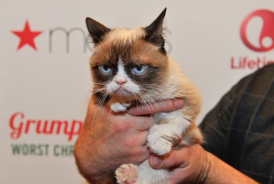 Pin for Later: 12 Celebrities Who Were Totally Unimpressed in 2014 Grumpy Cat Yes, this one's kind of a given. But hey, an unimpressed face is an unimpressed face, and Grumpy Cat is simply never impressed.