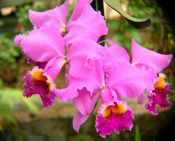 Orchideen, Lila, Blüte, Blumen, Blütenblätter, Rosa
