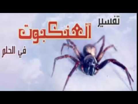 رؤية العنكبوت في المنام ودلالاته المختلفة Spider Insects