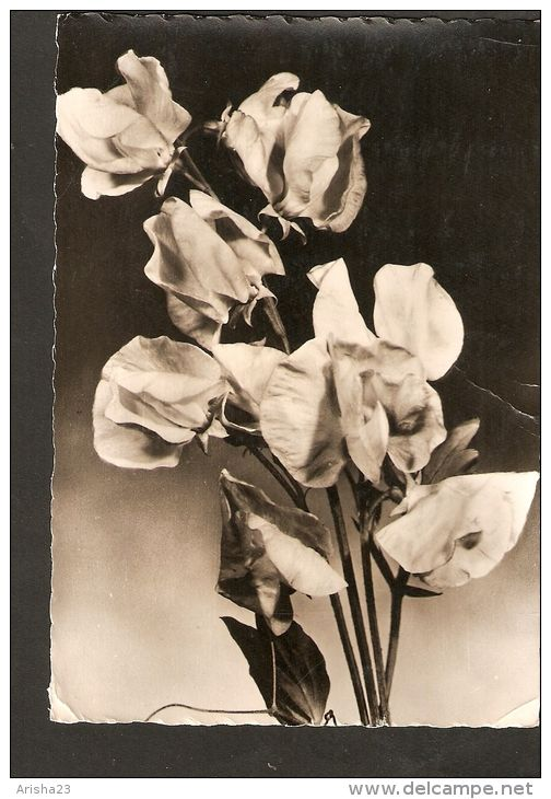 5k. Germany, Geburtstag Birthday - flora bunch of flowers bouquet - real photo -  graphokopie H. Sander - 1962