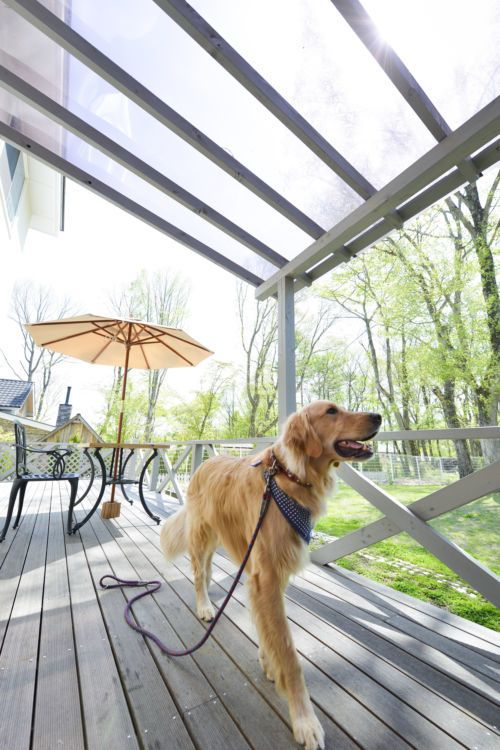 長野 愛犬と一緒に泊まれるペット可ホテル5選 おすすめスポットをご紹介 ペット スポット 陶芸体験