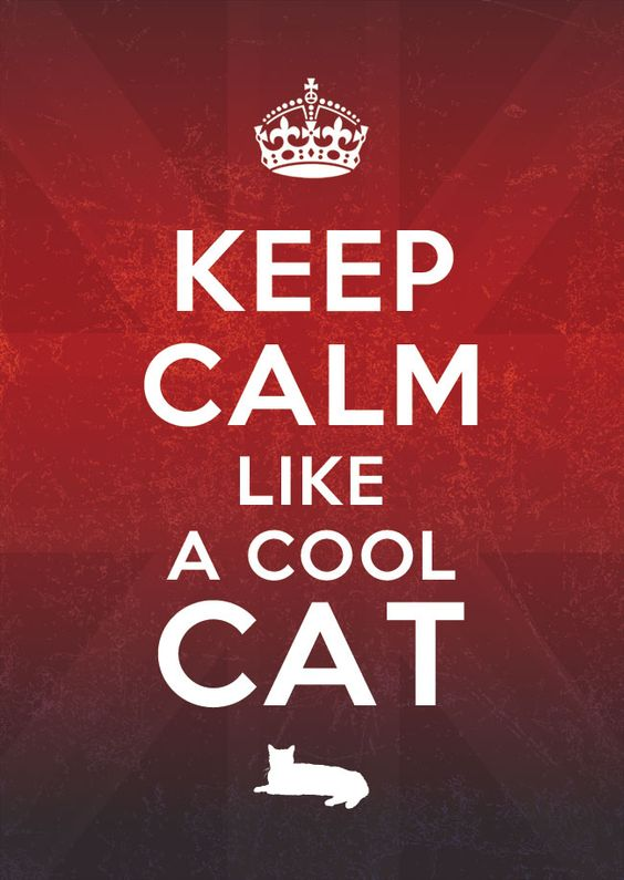 Keep Calm Like a Cool Cat. l #quotes