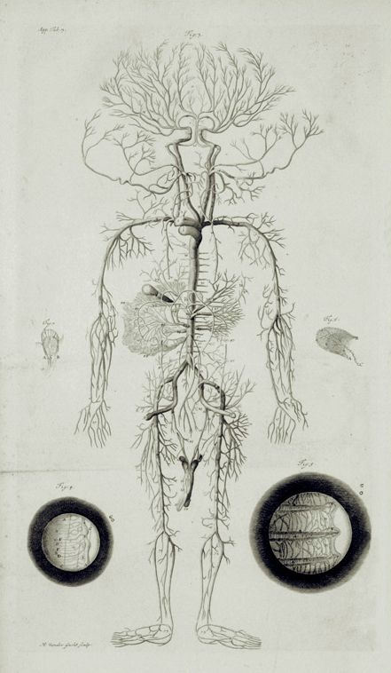 William Cowper - Anatomical Illustration (App. Tab. 3)