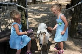 Mobile Petting Zoo - petting zoo rental - birthday party zoo rental  Irvine, Riverside, LA, Orange County, Santa Ana, and surrounding areas!