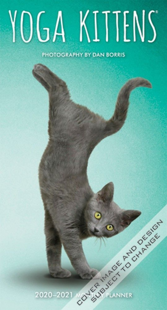 From The Mind That Brought You The Best Selling Yogadogs Calendar Comes This A Meow Sing Yogakittens Pocket Pl