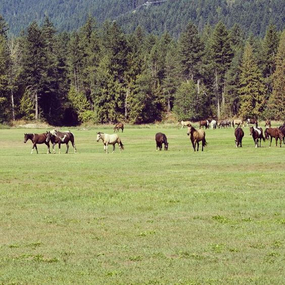 Was out at the #PembyFest site …. looks like #BandOfHorses showed up a little late this year. #oops.