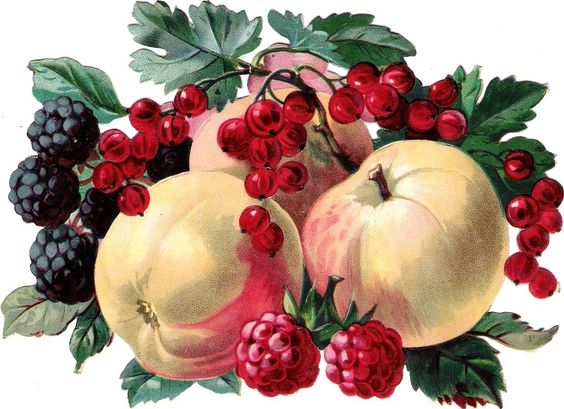 Oblaten Glanzbild scrap die cut chromo Obst  XL 17cm fruits Apfel apple berries: