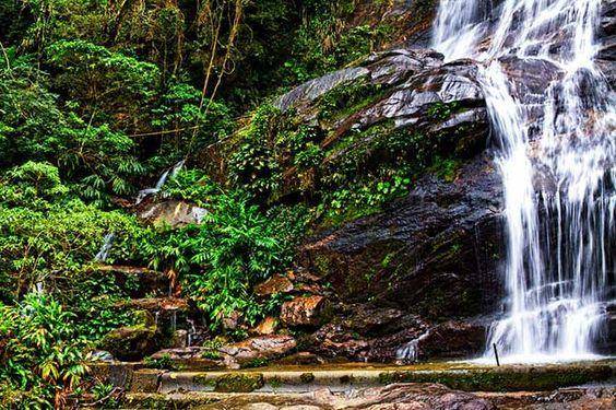 Tijuca Forest Brazil