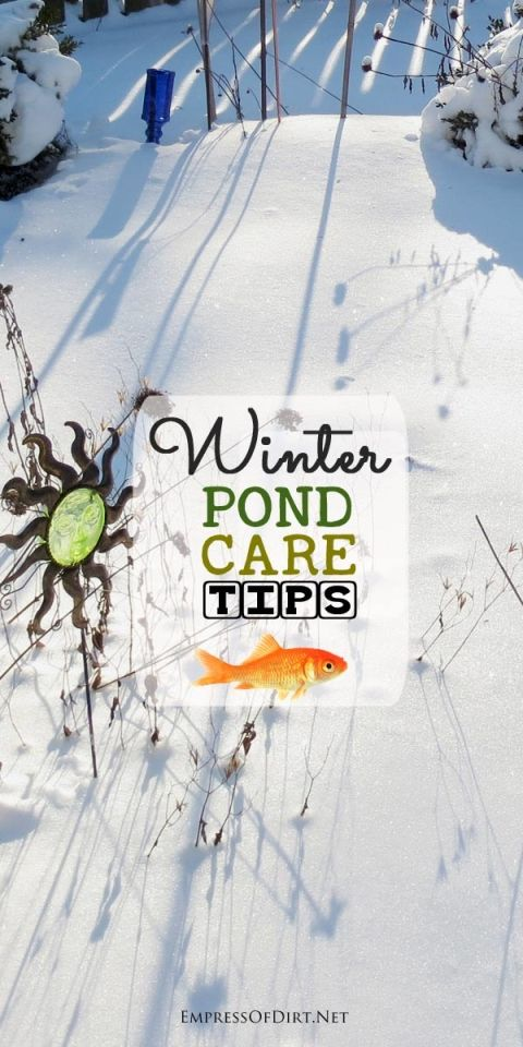 Winter pond care is not complicated but there are essential tasks to look after to ensure your fish and plants survive the cold, winter months. These tips are for small garden ponds (under 1000 gallons) with cold water fish.
