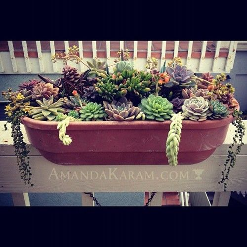 Amanda.com  New garden blog written by a good friend of mine here in Portland is now up.  She has grown up in the industry and is a talented gal.
