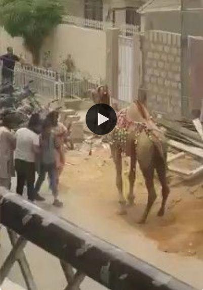 Quando o camelo fala pra não chegar perto kkkk