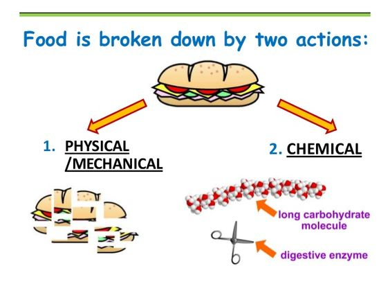 the chemical aspects of digestion and the breakdown of the proteins Chemical digestion of proteins: eggs eggstravaganza -enzymes are important to breakdown molecules to gain the energy that our body needs chemical digestion.