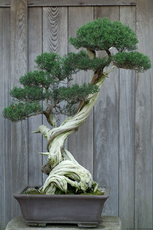 I used to hike out into the woods and find small trees and transplant them and wire them and so on to try grow my own bonsai. I never had the patience and ended up killing the poor trees... some day though... BONSAI!!!