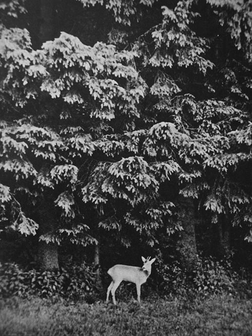 : Wild Nothings, Seed Nature, Black White, Photography Art, Forest, Animals Nature, Art Photo, Deers Birds