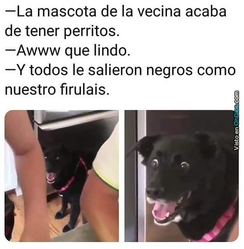 El Firulais Que Salio Igualito Al Dueno Funny Spanish Memes Stupid Memes Memes