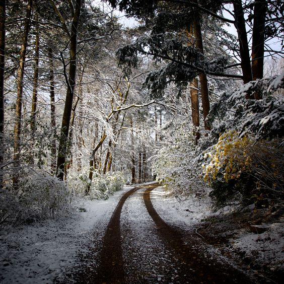 Frosty path to somewhere...