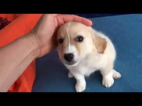 Zita Ein Hund In Not Aus Dem Tierschutz Youtube Hunde In Not Hunde Tierschutz