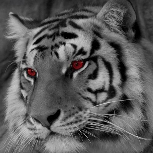 Aktivasi Khodam Macan Putih  Seni pertunjukan dan Seni