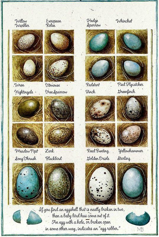 All about bird eggs | Leren over eitjes van vogels | Marjolein Bastin | #eggs #education #birds | See more at http://www.pinterest.com/RoosGast/