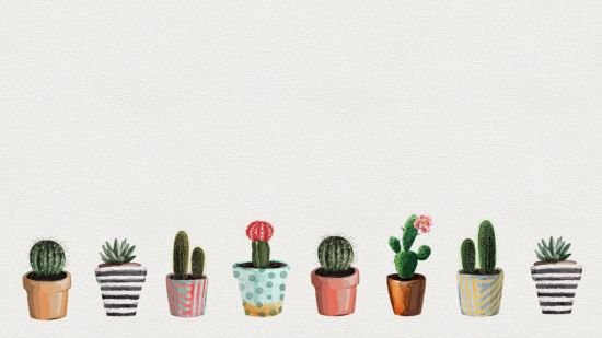 1920x1080 The Gallery For Succulents Wallpaper Cactus Cactus Background Succulents Wallpaper Cactus Backgrounds Wallpaper Notebook
