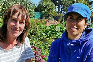 Alternative shot: New Brighton community gardens