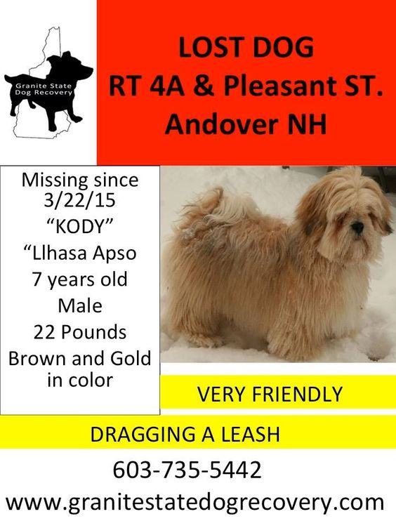Missing Male Llhasa Apso in Andover NH. Kody is 7 years old and is approx 22 Pounds and was last seen dragging a leash in the area of Pleasant Street and RT4 A. Please Call his family at 603-735-5442 Sharon Boulanger