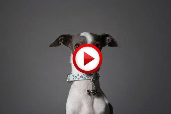 Dog has a snack #dogs, #videos, #videobox, #pinsland, itunes.apple.com/...