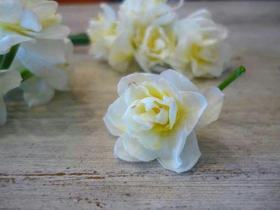Narcissus.  Labellumflowers.com